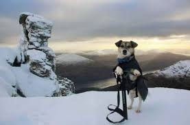 Image result for dogs in mountains images