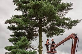 Tell-Tale Signs of a Reputable Tree Removal Company