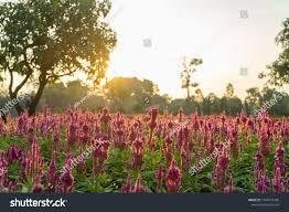 Tropical Flower Garden Landscape Designs Landscape Design Park English Style Tropical Stock Photo