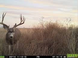 Field Judging Mule Deer 20 Matching Articles Field And