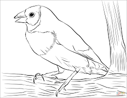 Just pick a coloring sheet, pay, and download! Finch Coloring Purple Finch Coloring Page Free Printable Coloring Pages Carson Abimillepattes Com