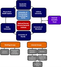 Legend Organizational Structure Of The Ignite Network