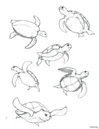 Coloring Pages Sea Turtle Coloring Page Free Baby Pages Cute Sheet