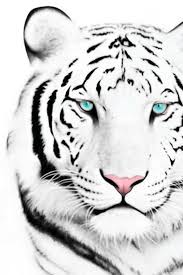white tiger iphone 5 wallpaper. Interesting White Top 6 White Tiger Iphone Wallpapers Best Desktop  Background Inside 5 Wallpaper