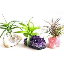 terrarium fairy garden stone