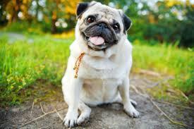 How to Potty Train an <b>Older Dog</b>: Housetraining <b>Adult Dogs</b>