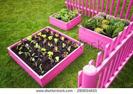 Small Picture Beautiful Herb Garden Pink Raised Beds Stock Photo 280054661