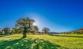 Green Grass Blue Sky Blue Sky Tree Countryside Summer Hill