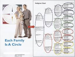 The Familyroots Organizer Color Coding System 13 Steps