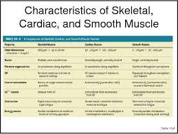 Pdf Classification Of Muscle Cells Semantic Scholar