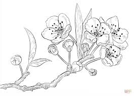 Small Picture Cherry Blossoms coloring page Free Printable Coloring Pages
