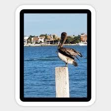 Pelican Size Chart Pelican On Post
