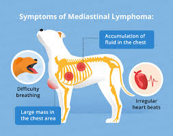 Canine Lymphoma Symptoms Lymphoma In Dogs Canna Pet