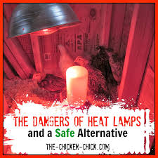 Safe Bathroom Heaters The Chicken Chickar The Dangers Of Brooder Heat Lamps A Safe