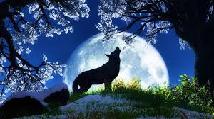 The great collection of wolf pc wallpaper for desktop, laptop and mobiles. Wolf Wallpapers Hd 1080p For Laptop Desktop Great Love Art