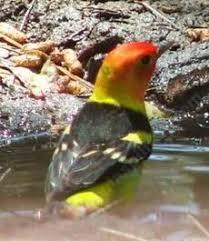 149 Best February National Bird Feeding Month Images On Pinterest Backyard Bird Watch
