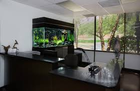 Office and Workspace: Black Aquarium For The Office, Cool Fish .