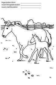 Paarden Kleurplaten Paard Knutselen Kleurplaat Paarden Paarden