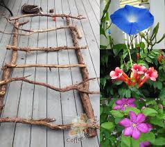 Popular Metal Trellis With Climbing Plant For Garden Design Climbing Plant Trellis