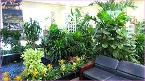 low light hanging plants relaxing hanging plants low light home design ideas together with tropical plants low light hanging plants