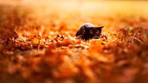 feline, Depth Of Field, Cat, Nature ...