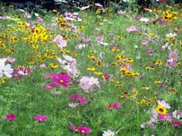 Small Picture Perennial Wildflower Garden Design Colorado Natural Landscaping