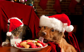 christmas puppies wallpaper. Contemporary Puppies Christmas Puppies And Kittens Wallpaper These Backgrounds Are  Free To Download And Available In High Definition For Your Desktop Pc Laptops R