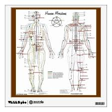Human Meridians Pressure Point Chart Wall Decal
