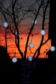 amusing outdoor ball lights tree for trees 6