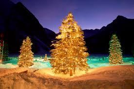 tree-winter-forest-bright-lights-christmas-midnight-wallpaper-