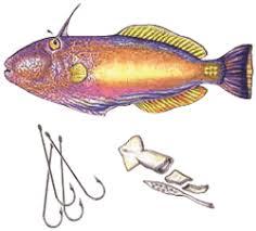 Go Fishing Port Phillip Bay Vfa