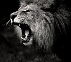 lion roaring black and white. Perfect Roaring View Original Size For Lion Roaring Black And White