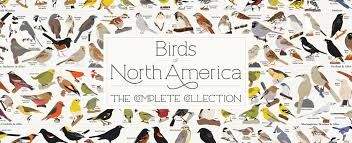 New Birds Of North America Poster 740 Species Because Birds