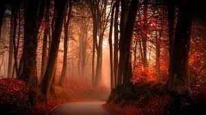 Autumn Forest Wallpaper - Photo #28901 ...