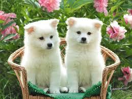 cute puppy wallpaper hd wallpapers