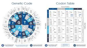 Codon Chart Circle Codon Charts Codon Table Sheets Genomenon