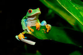 image of a frog. Wonderful Frog In Image Of A Frog C