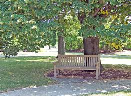 Image result for bench