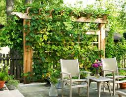 A Guide to Vertical Gardens and Plants for Walls and Privacy  Landscaping  Ideas