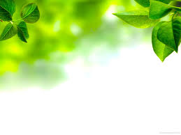 Leaves Background For Powerpoint Free Christian Images