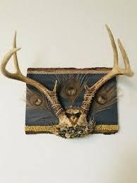 deer antler wall art with preserved