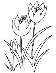 Drie Tulpen Kleurplaat Gratis Kleurplaten Printen
