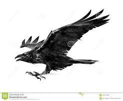 изолированный эскиз вороны летания на стороне иллюстрация штока