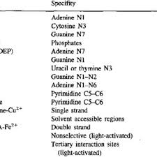 Chemical Probes Used For Nucleic Acid Structure Determination