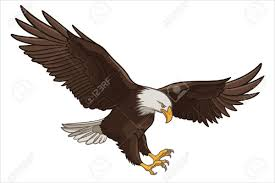 bald eagle template 9 eagle illustrations free premium templates free premium