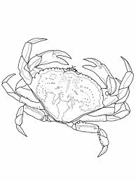 Small Picture Coloring Page With Volleyball Hermit Crab Pages Hermit Crab
