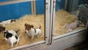 Resultado de imagen para perros en negocios