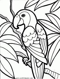 Parrot Coloring Pages Cinderella Pinterest Coloring Pages