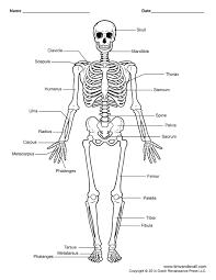 Beautiful human skeleton pictures with labels sketch human anatomy rh fullthreadahead skeleton arm drawing human