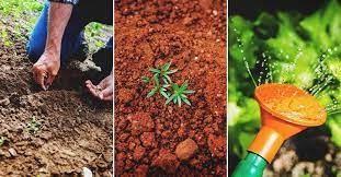 fall gardening how to plan and start a